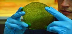 Julian Melchiorri : Creata la prima foglia artificiale che produce ossigeno