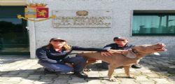 Rapito a Torino e ritrovato a Milano! La storia di Wisi, il cane sequestrato