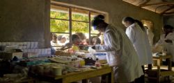 Sporobot : La malaria finalmente sconfitta!