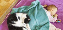 Gatto domestico uccide bimba di 9 mesi stendendosi su di lei! La piccola Alexandra è morta soffocata