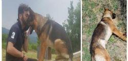 Ucciso il cane eroe di Amatrice Kaos : Avvelenato dagli umani che tante volte aveva salvato
