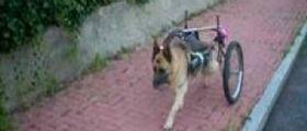 Ancona, il cane Pluto travolto da un