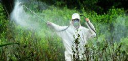 Pesticidi :  l