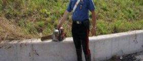 Treviso, Padre e figlio litigano per il terreno : Ferisce il figlio con una motosega