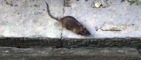 Belgio : La piccola Melina mangiata viva dai topi mentre dormiva in un cestino