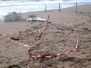Orrore in spiaggia ad Albarella: turista trova pezzo di mand