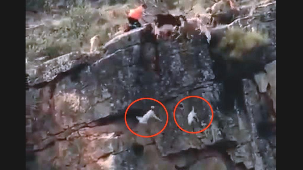 Video caccia