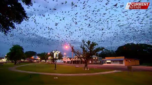 Invasione Di Pipistrelli In Australia - Video