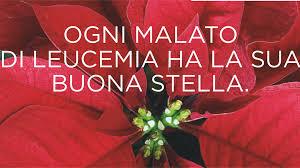 Per i pazienti ematologici ci sono stelle che fioriscono anche nei momenti più difficili, sono le Stelle di Natale AIL. Inizia stamani la vendita