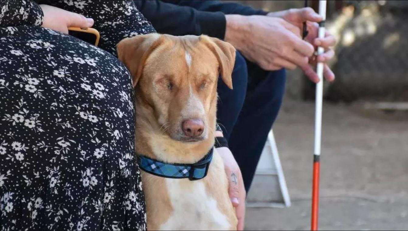 Louis, il cane cieco che è stato adottato da una persona che sta perdendo la vista