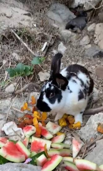 Ischia    turisti uccidono un coniglio a sassate    Solo un gioco