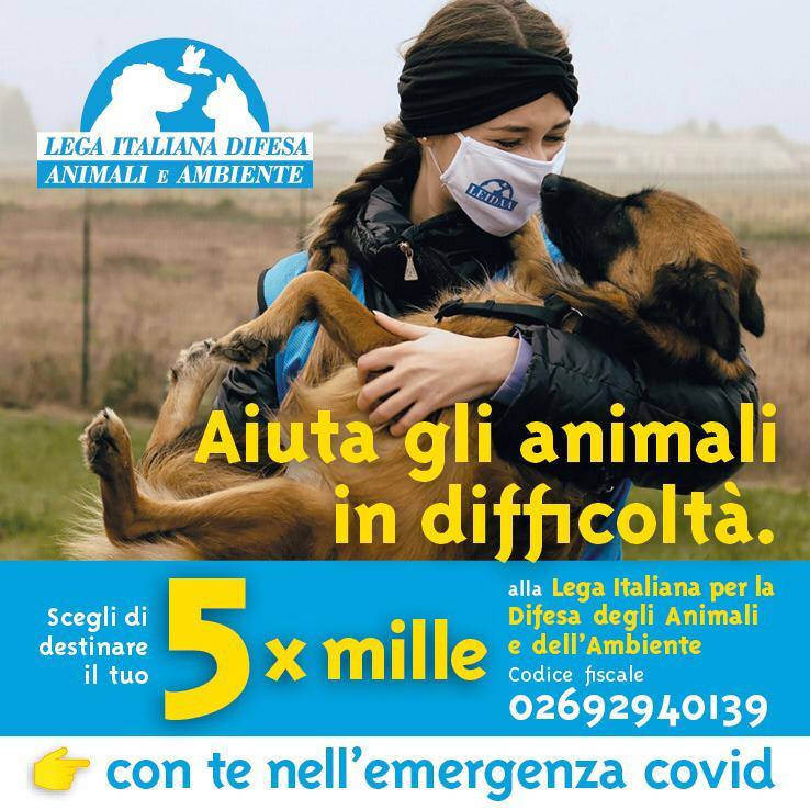 PER GLI ANIMALI È TUTTO! DONA IL 5XMILLE ALLA LEGA ITALIANA DIFESA ANIMALI E AMBIENTE