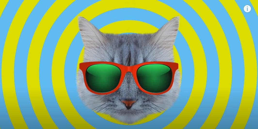 Boom su TikTok e Youtube : Quattro produttori e dj italiani rivisitano con i gattini un noto canto popolare finlandese