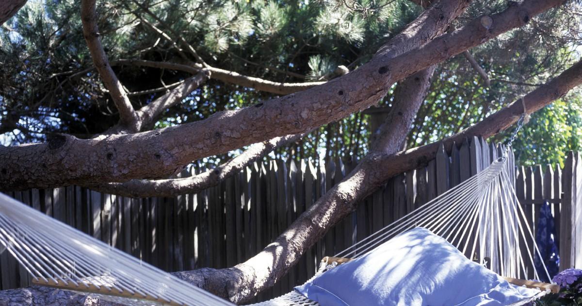 Trieste, turista dorme su un'amaca in pineta e la Polizia lo