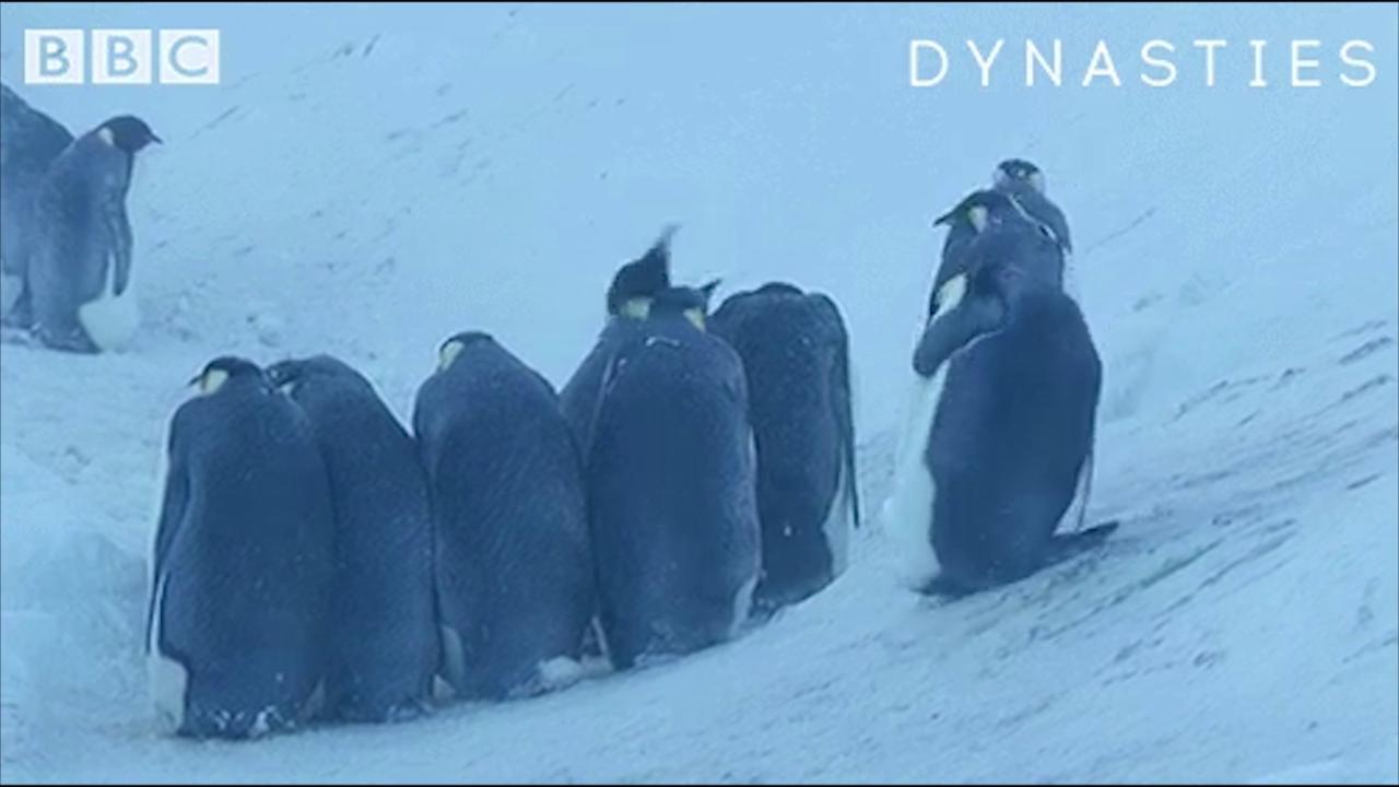 Bbc Antartide