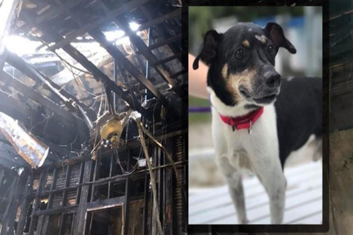 Cane eroe si sacrifica e muore per salvare la vita alla sua
